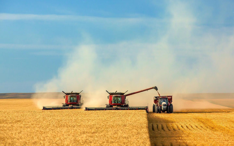 В Казахстане планируют собрать 18,5 млн тонн зерна – меньше, чем в прошлом засушливом году